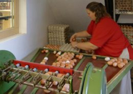 Frau Meyer an der Eiersortiermaschine