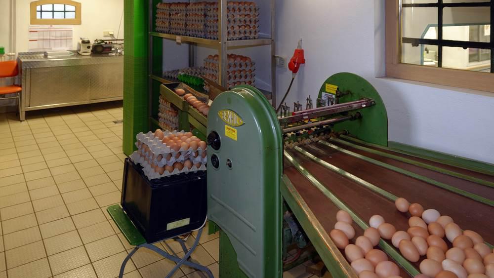 Eiersortiermaschine